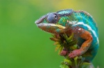 Chameleon botnet steals $ 6.2 million from advertisers per month